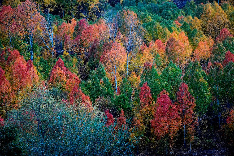 Красочные деревья на холмах турецкой провинции Гюмюшане