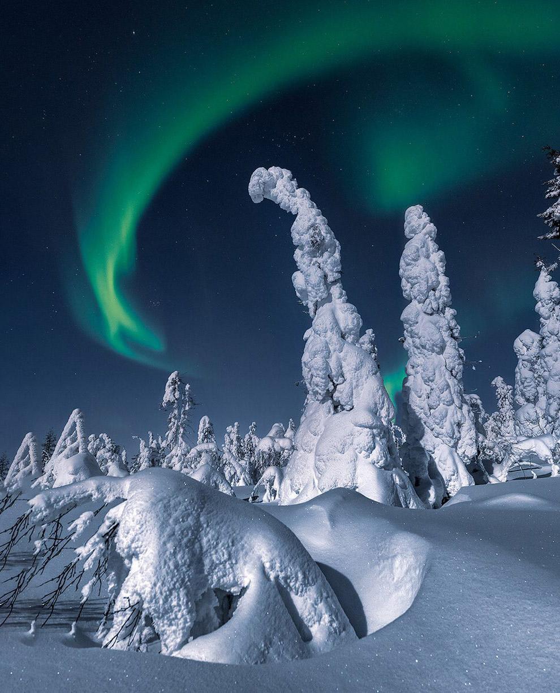 Северное сияние в снежном лесу