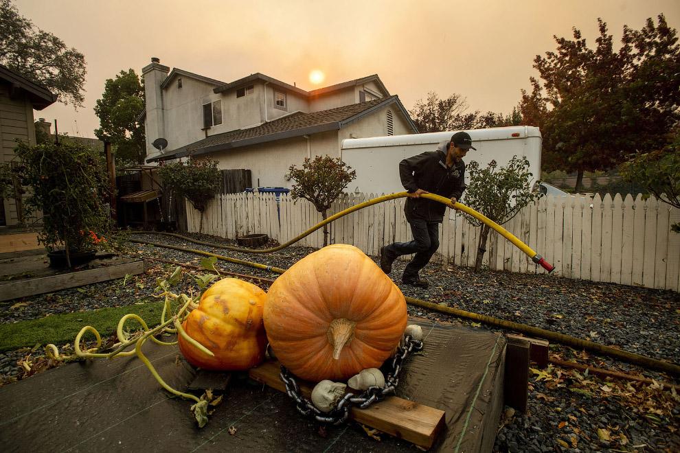 Пожары в Калифорнии 2019