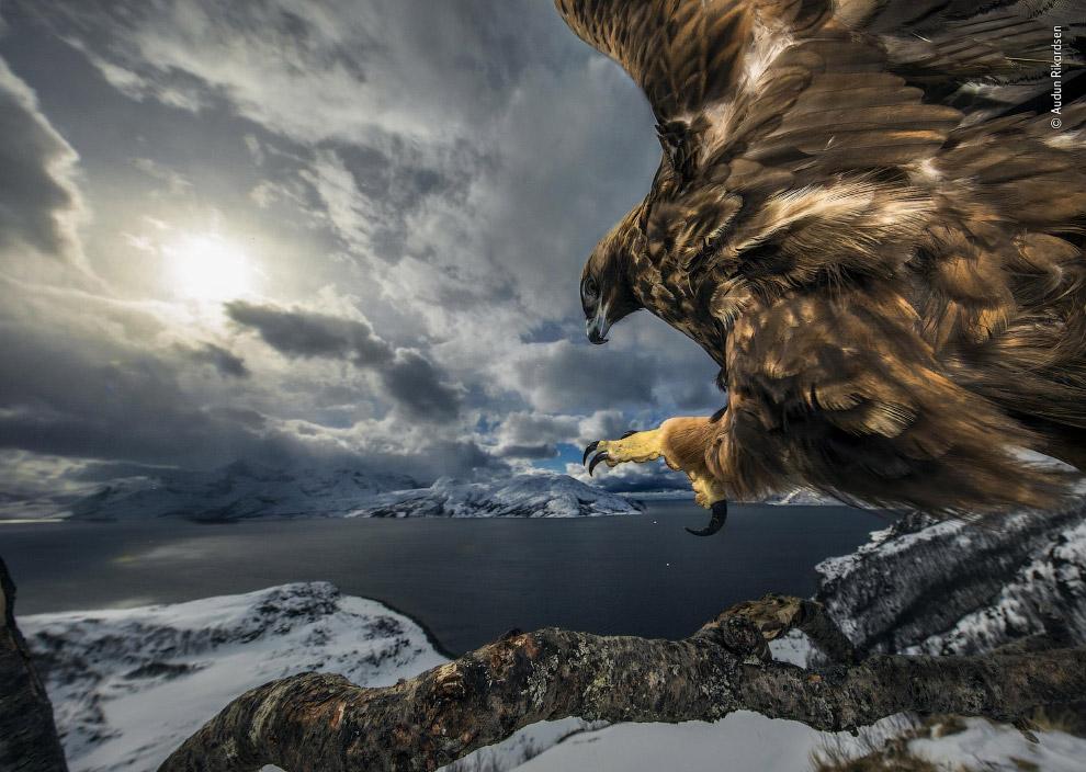 Орел йде на посадку