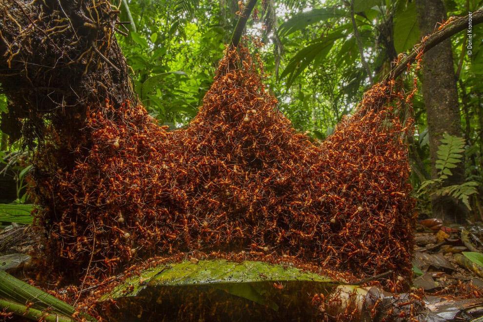 колонія мурах