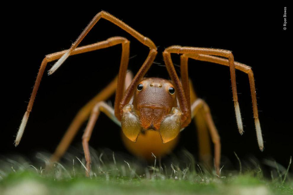 портрет павука