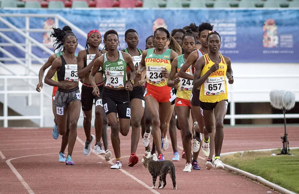 Кот решил посмотреть поближе на бегунов на дистанции 5 км в Рабате, Марокко