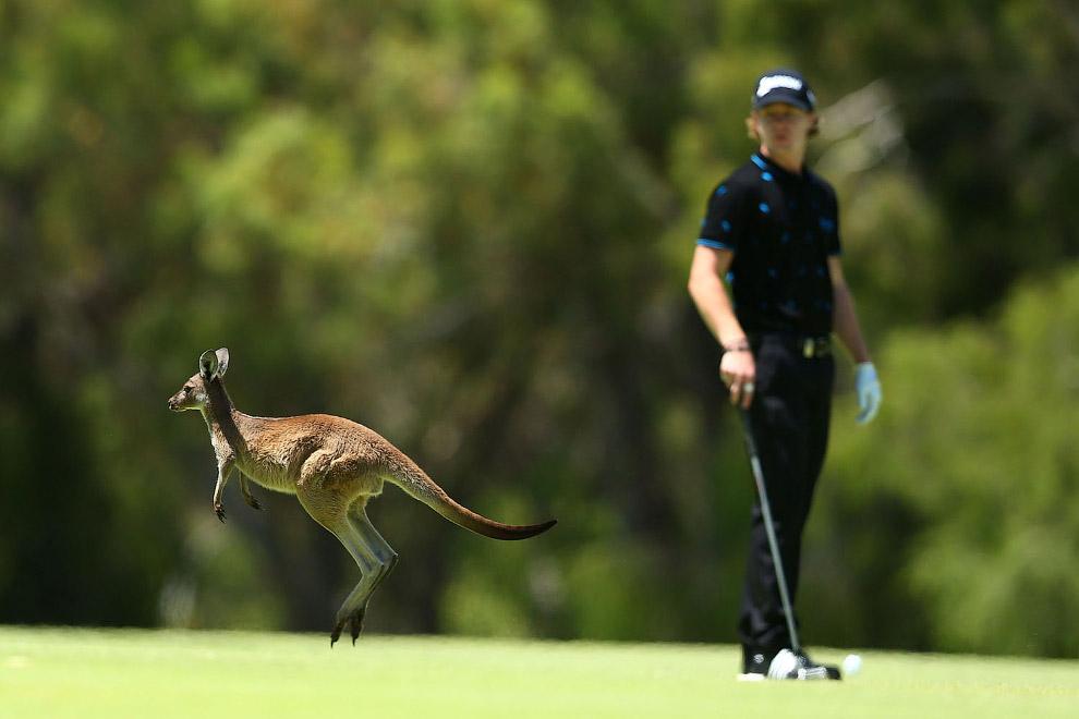 Участник соревнований по гольфу в Перте, Австралия