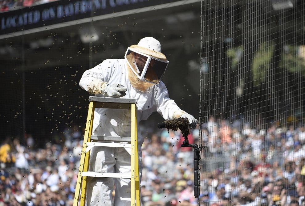 Прилетел целый рой пчел