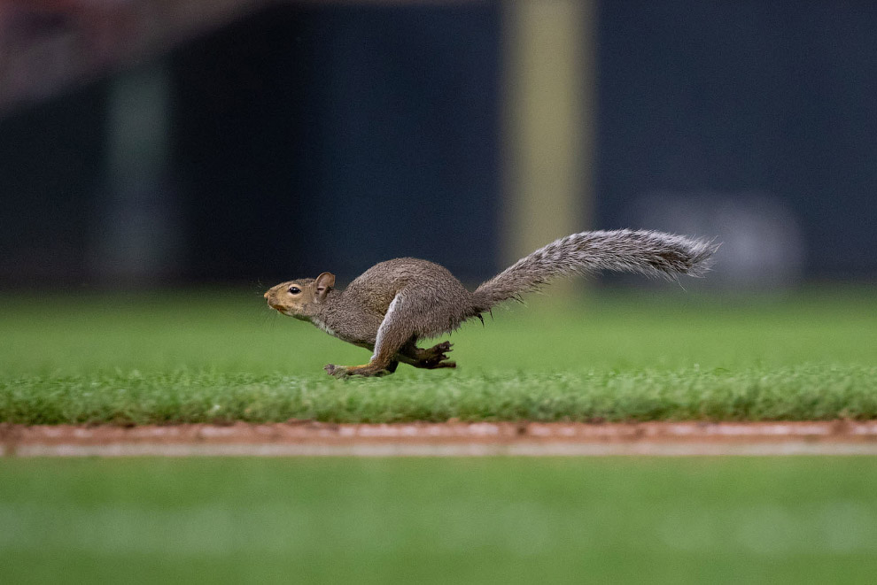 Gallop of proteins on the field in Minnesota