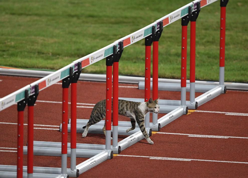 Кошка на соревнованиях по легкой атлетике среди женщин в Джакарте