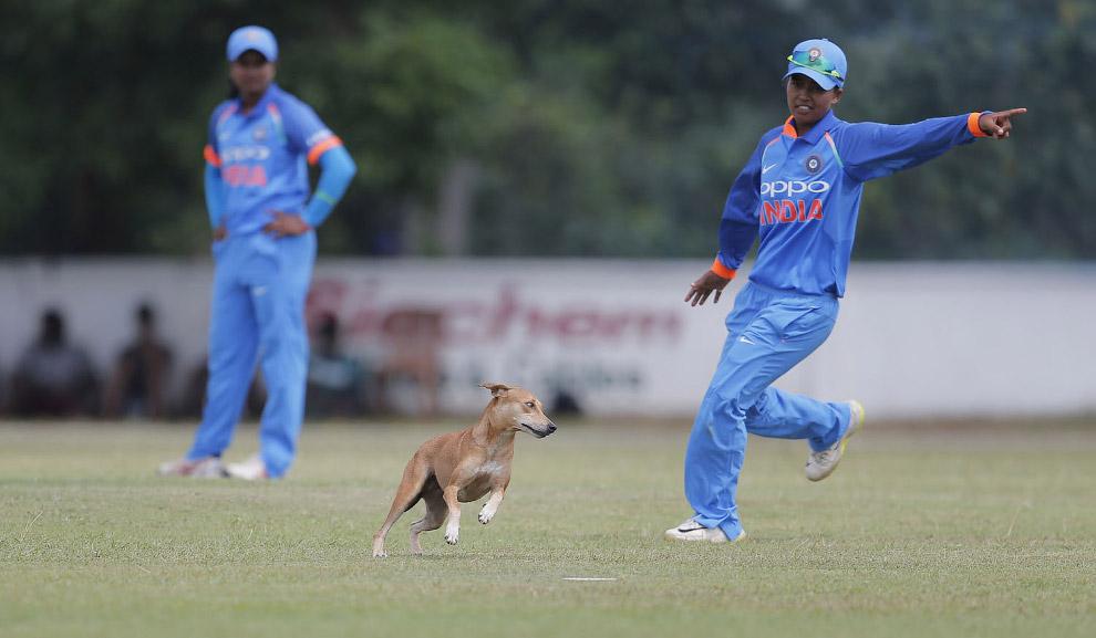 Go-ka you here.  Match in Sri Lanka