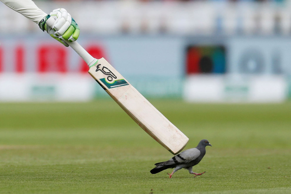 Dove during a cricket match between England and India at Edgbaston, England