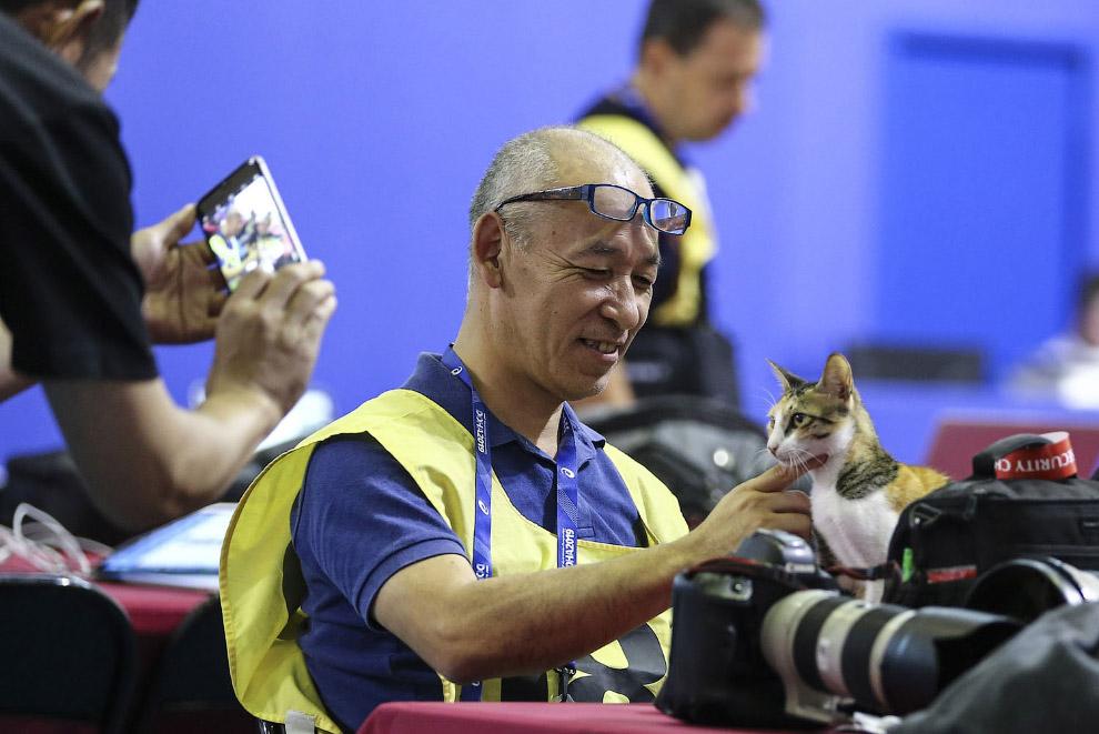 Пресса на чемпионате мира по легкой атлетике в Дохе
