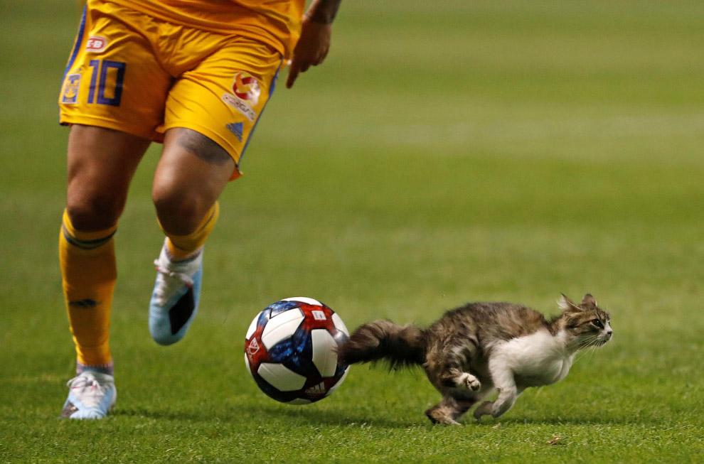 Кот на стадионе в Солт-Лейк-Сити, штат Юта