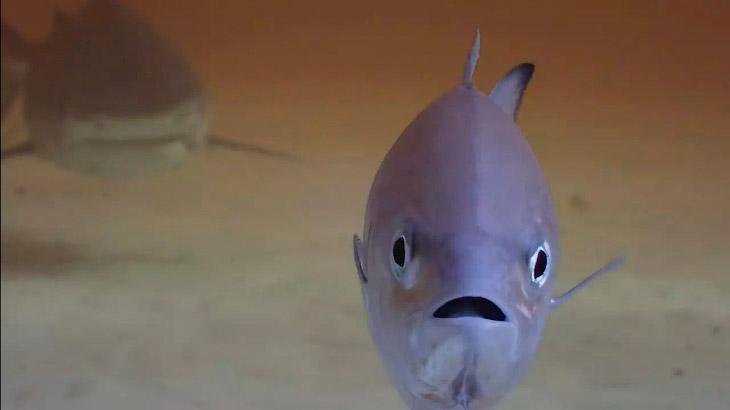 Удивленная рыба