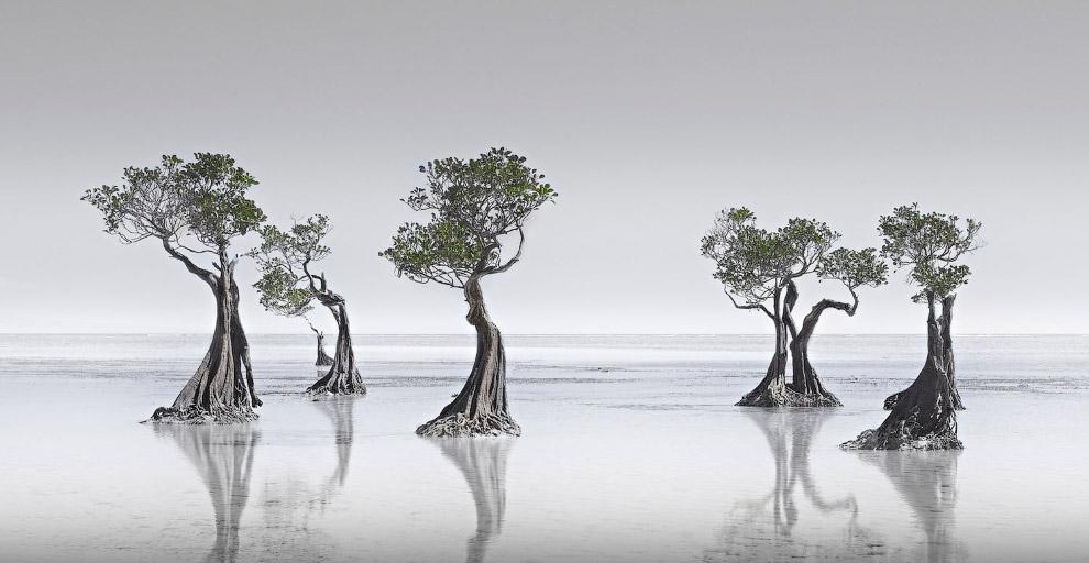 мангрові зарості