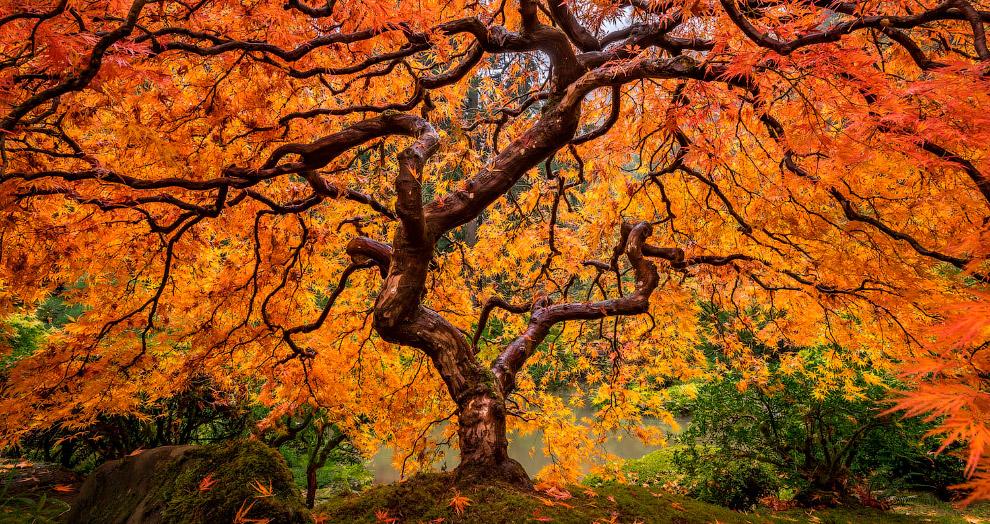 «Вены дерева»