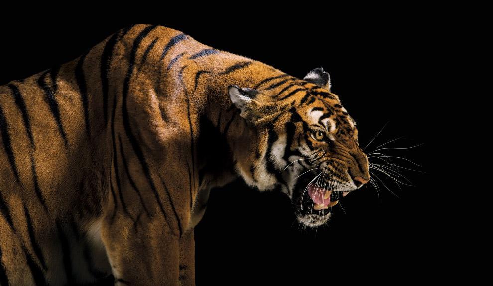 Новый ковчег: каких животных мы теряем