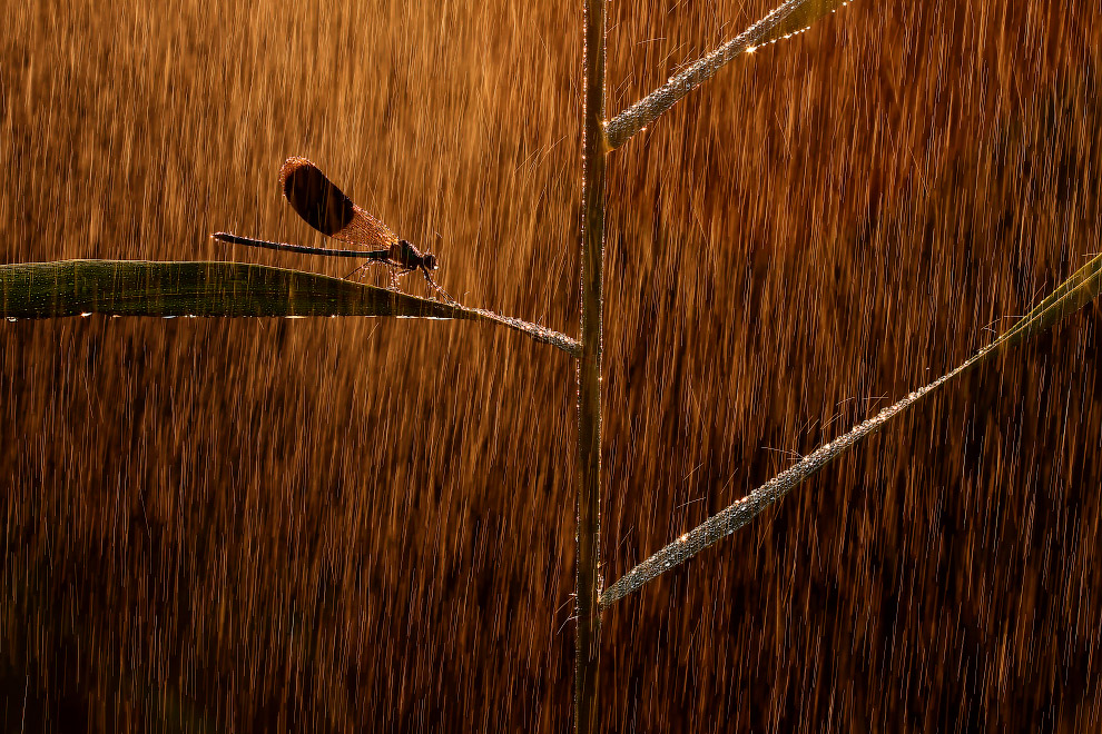 "Winner in the category ""Other animals"": a picture with the title ""In the rain"""