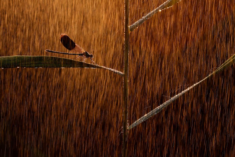 Победитель в категории «Другие животные»: снимок с названием «Под дождем»