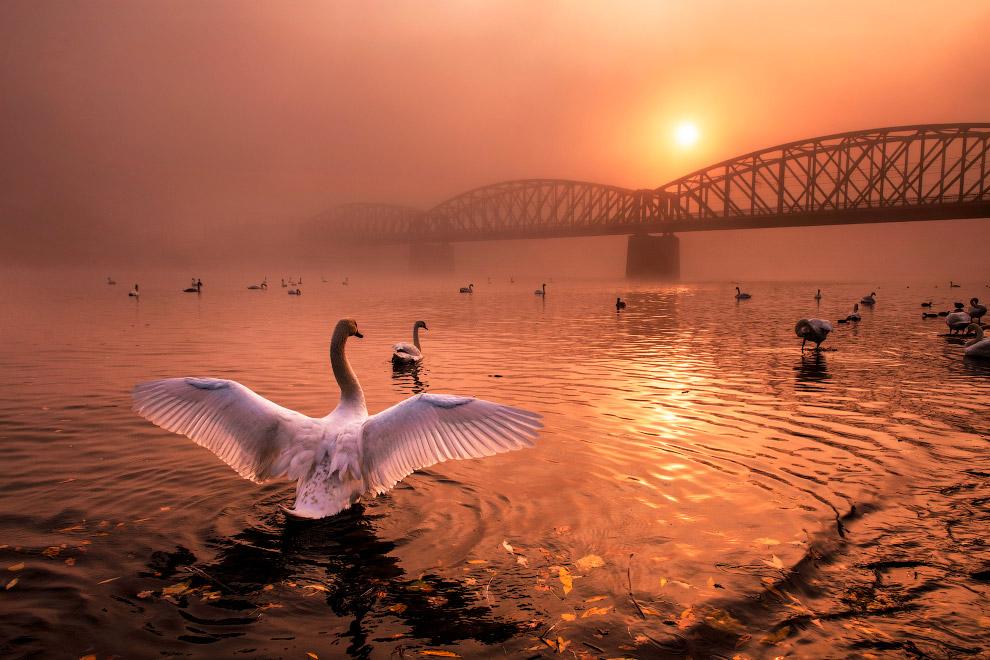 Победитель в категории «Птицы»: снимок с названием «Приветствие солнцу»
