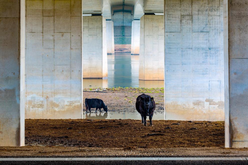 Победитель в специальной категории «Пейзажи Лейджа Ландена»: под мостом