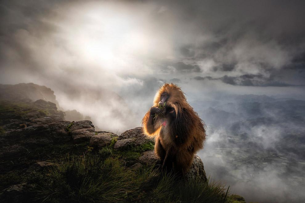 Задумчивы бабуин