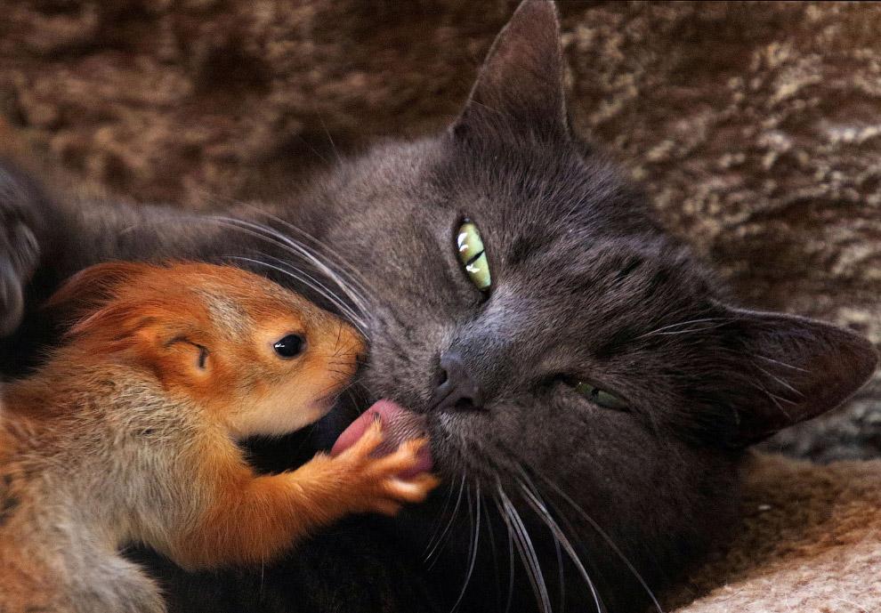 Кошка и белка  в Бахчисарае, Крым