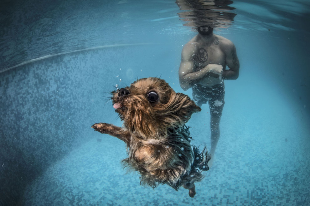 Dog during aquatic therapy session in Istanbul, Turkey