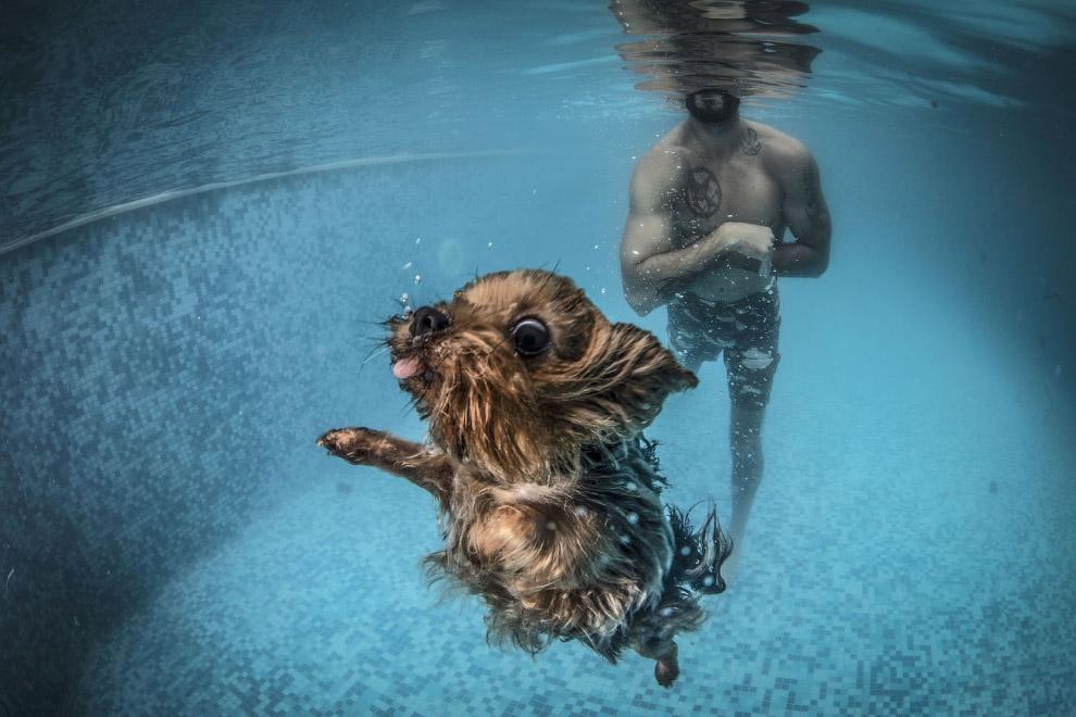 Собака во время сеанса водной терапии в Стамбуле, Турция