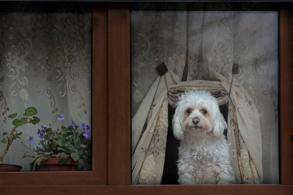 Собака в окне в Бухаресте, Румыния