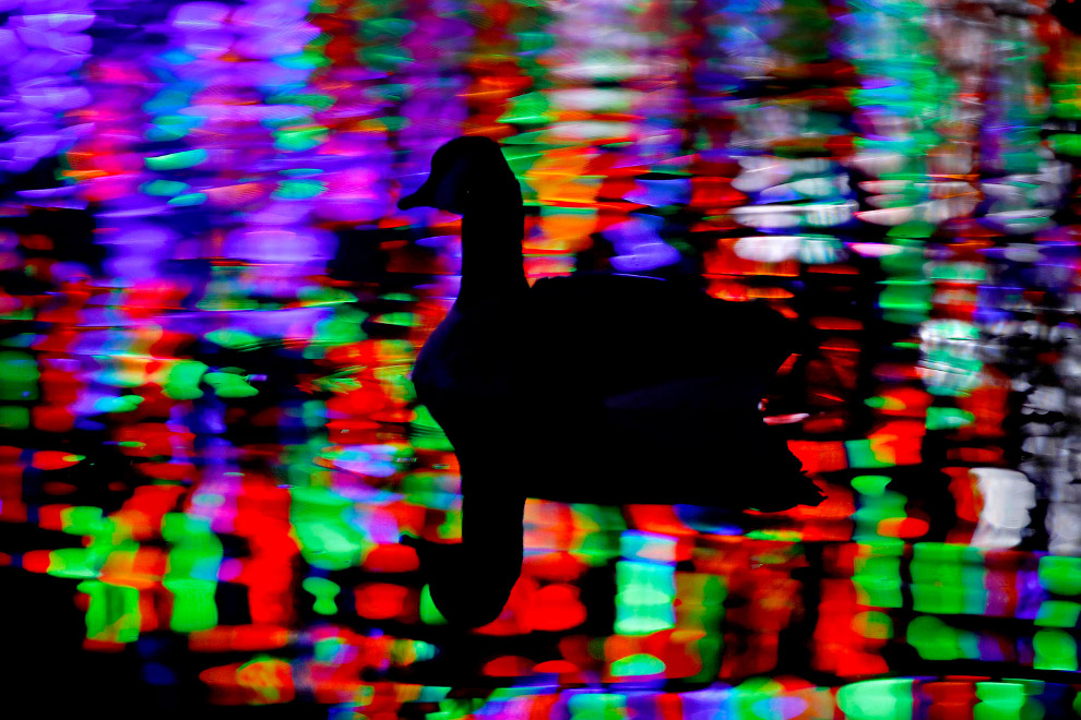 Christmas lights and geese on a pond in Lenexa, KS