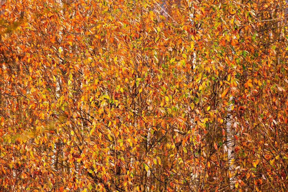 Белорусская осень в конце октября