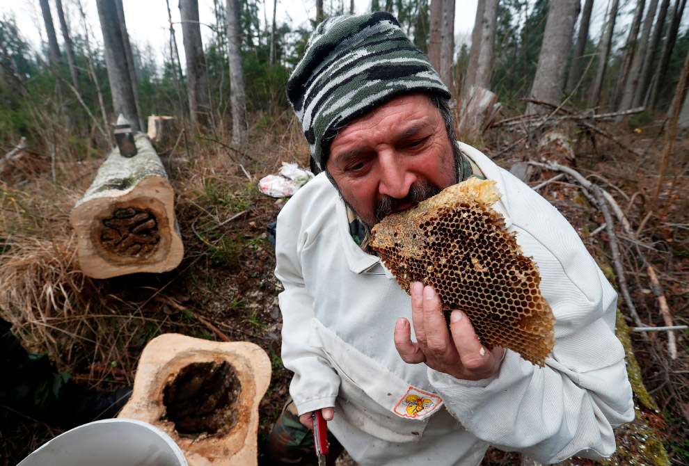 BELARUS-AGRICULTURE/WILD BEES