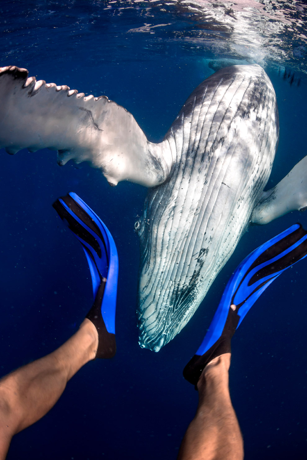 PHOTOS: Swimming with whales