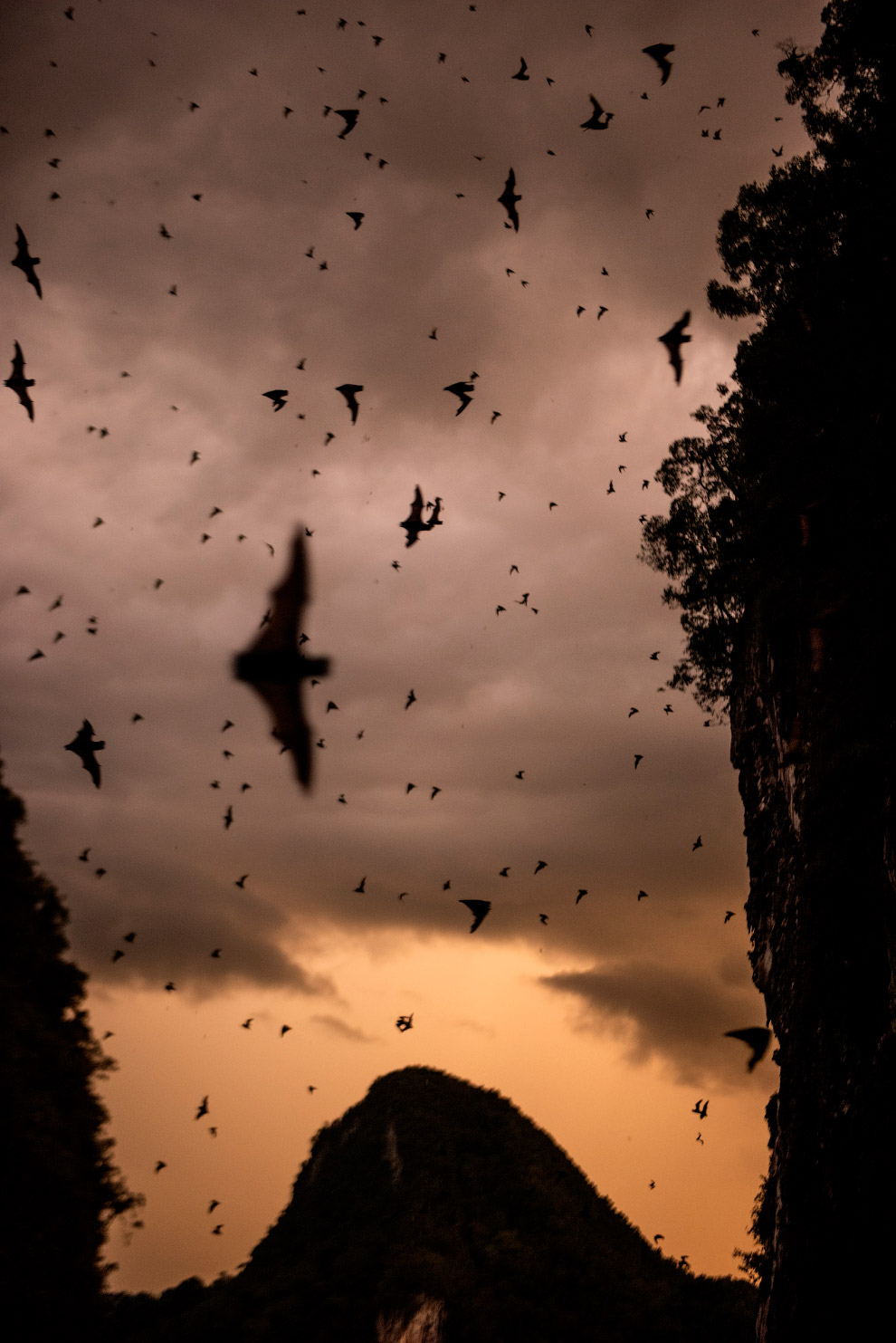 The deer cave Borneo live over two million bats