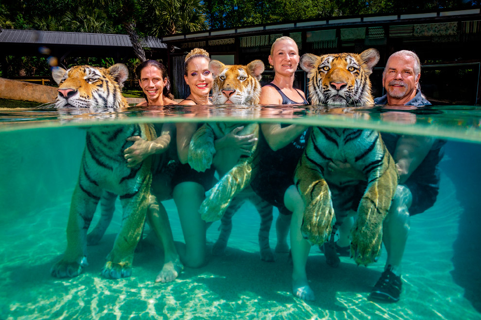 С тигрятами в бассейне