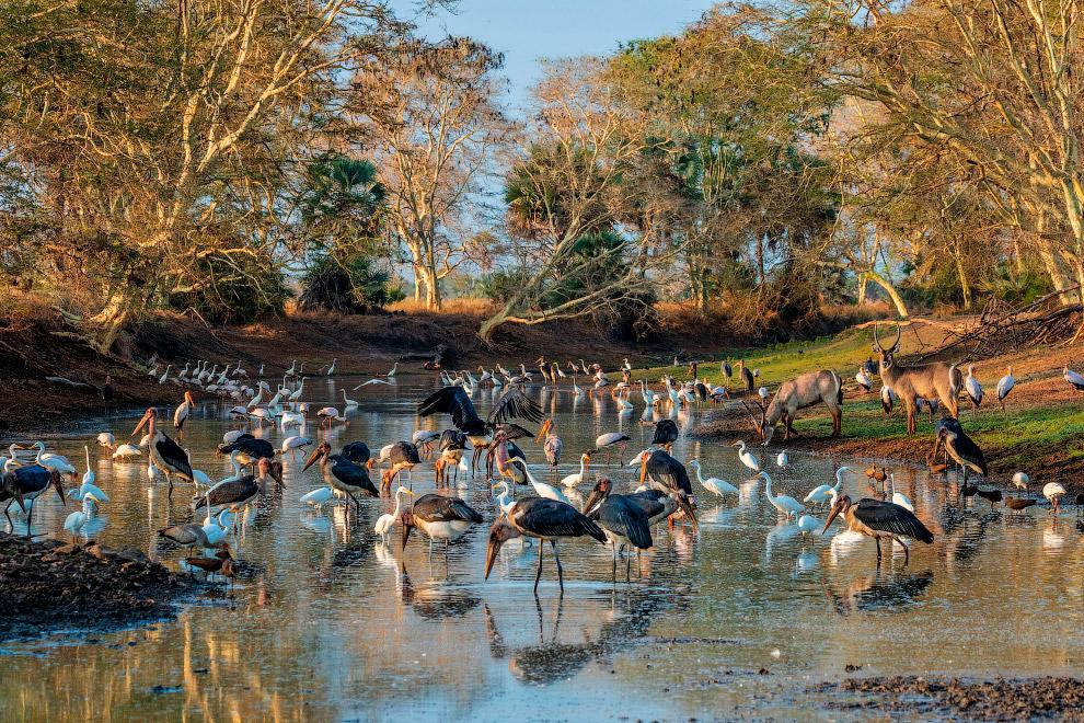 Gorongosa National Park and bird
