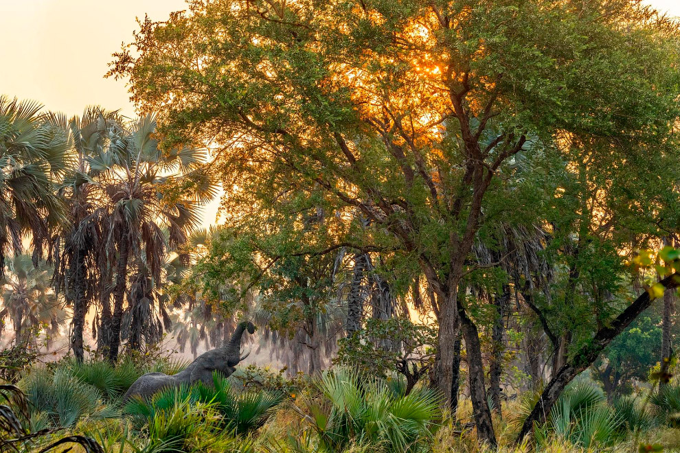 Elephant in the Gorongosa National Park
