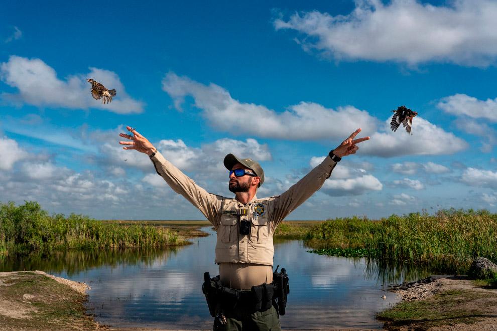 Выпуск в дикую природу конфискованных у контрабандистов певчих птиц