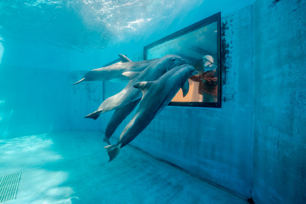 Дельфины, штат Калифорния
