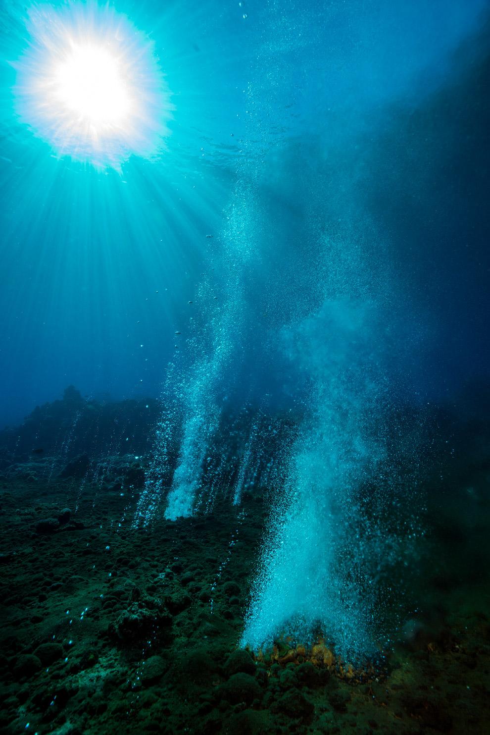 Коралові рифи