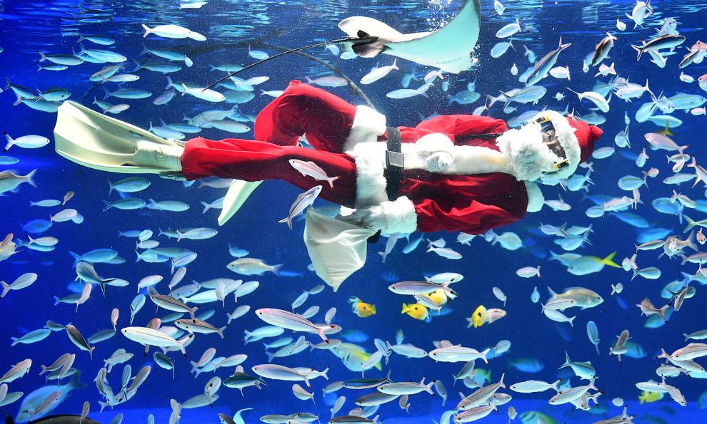 Водолаз в костюме Санта-Клауса, Токио