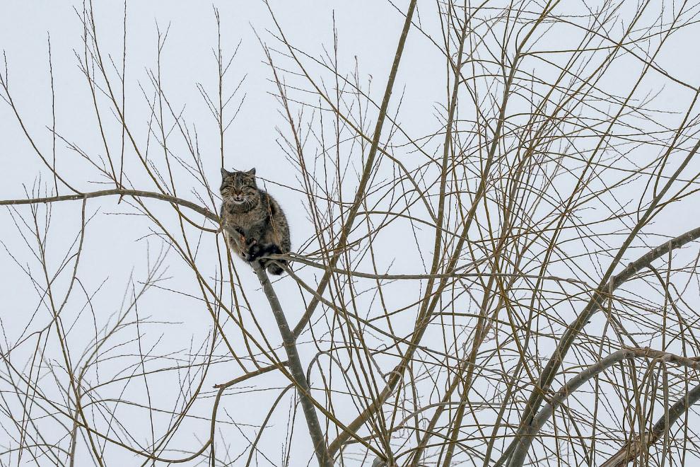 Кошка сидит на дереве в морозный зимний день