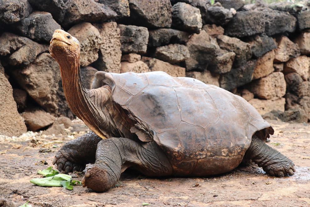 Национальный парк на Галапагосских островах