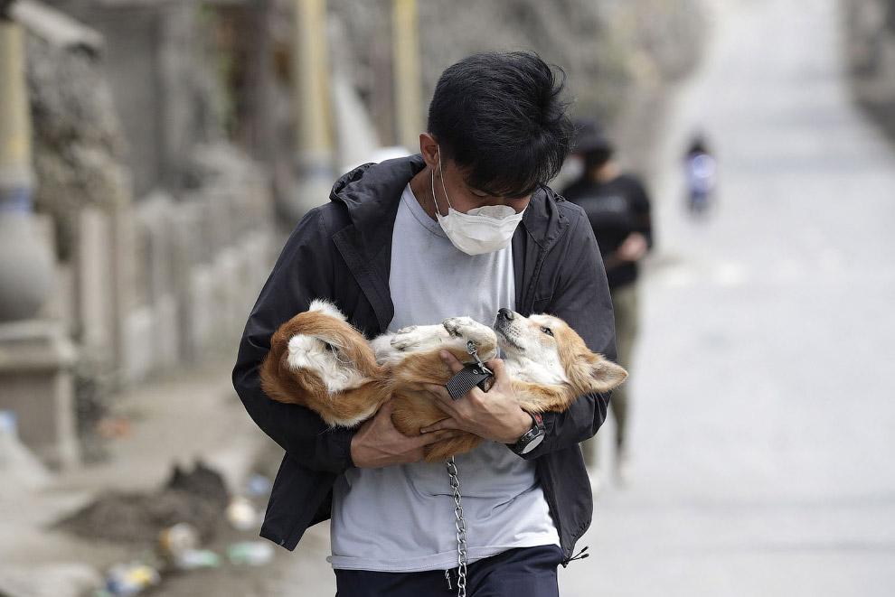 Спасенная собака в Талисае, провинция Батангас, на юге Филиппин