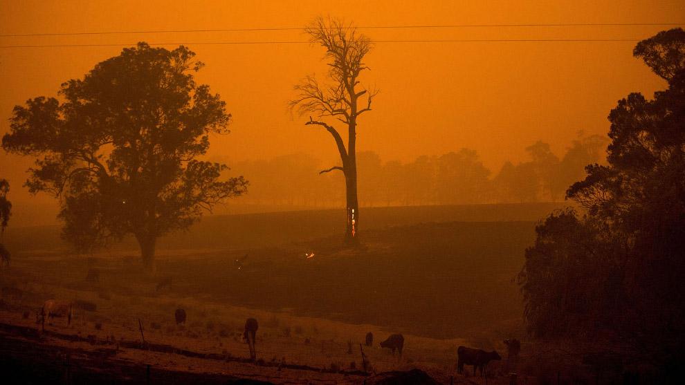 Оранжевое небо от пожаров в Новом Южном Уэльсе