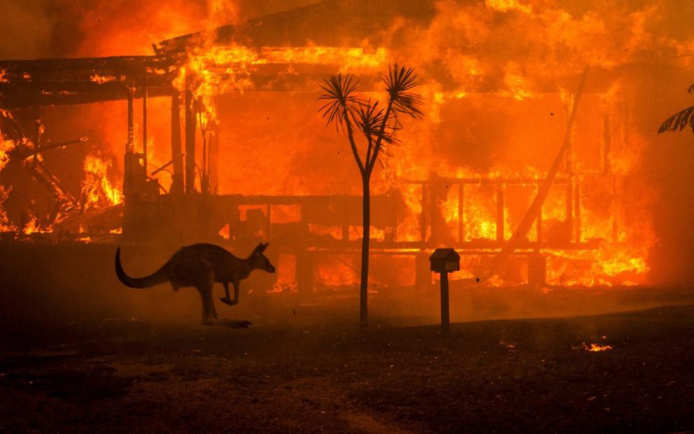 Пожары в Австралии 2020