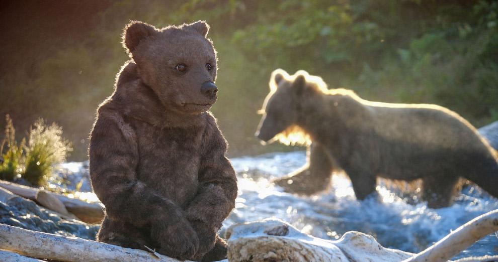 Медвежонок Гризли на на Аляске