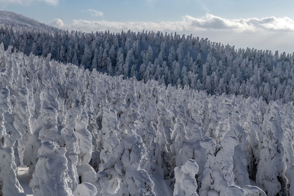 Снігові монстри старого вулкана в Японії