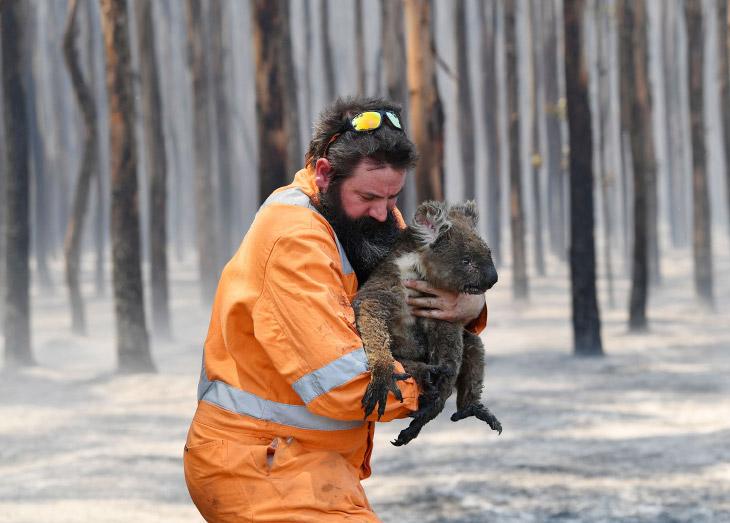 Как спасают животных в Австралии