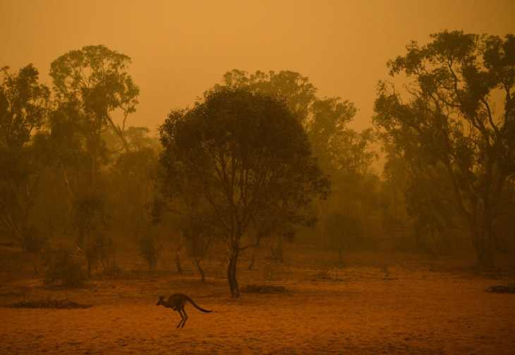 Red sky from fires and kangaroos