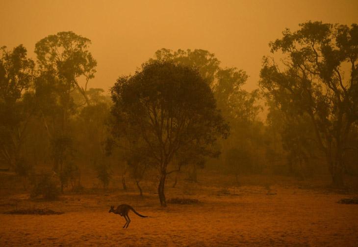 Красное небо от пожаров и кенгуру